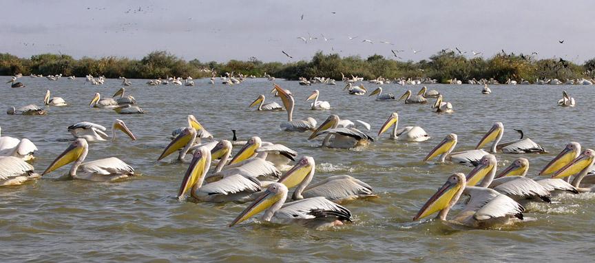 Djoudj National Bird Sanctuary