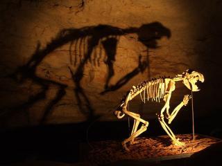 Fossil Mammal Sites