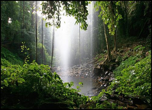Gondwana_Rainforests