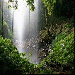 Gondwana_Rainforests