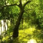 The Sundarbans