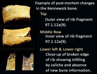 Example of Ante-Mortem-Origin